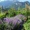Im Garten, Engelhörner