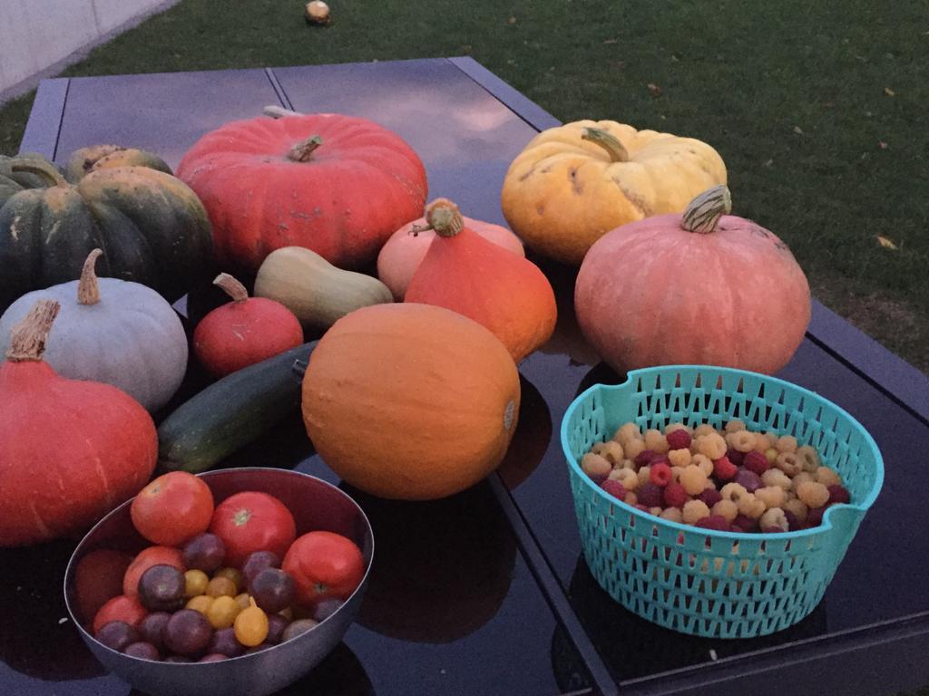 récolte du jardin en automne