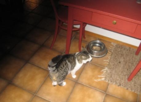 Notre chat Nemia