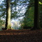 forest 10 minutes walk