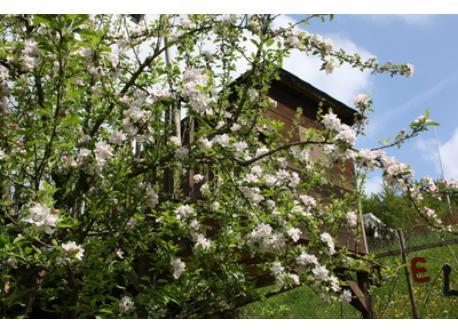Baumhaus im Frühling
