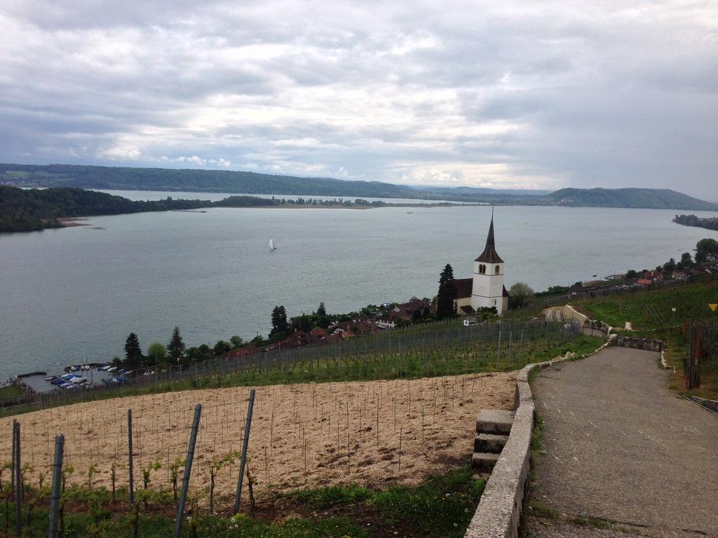 Vineyards along Lake of Biel