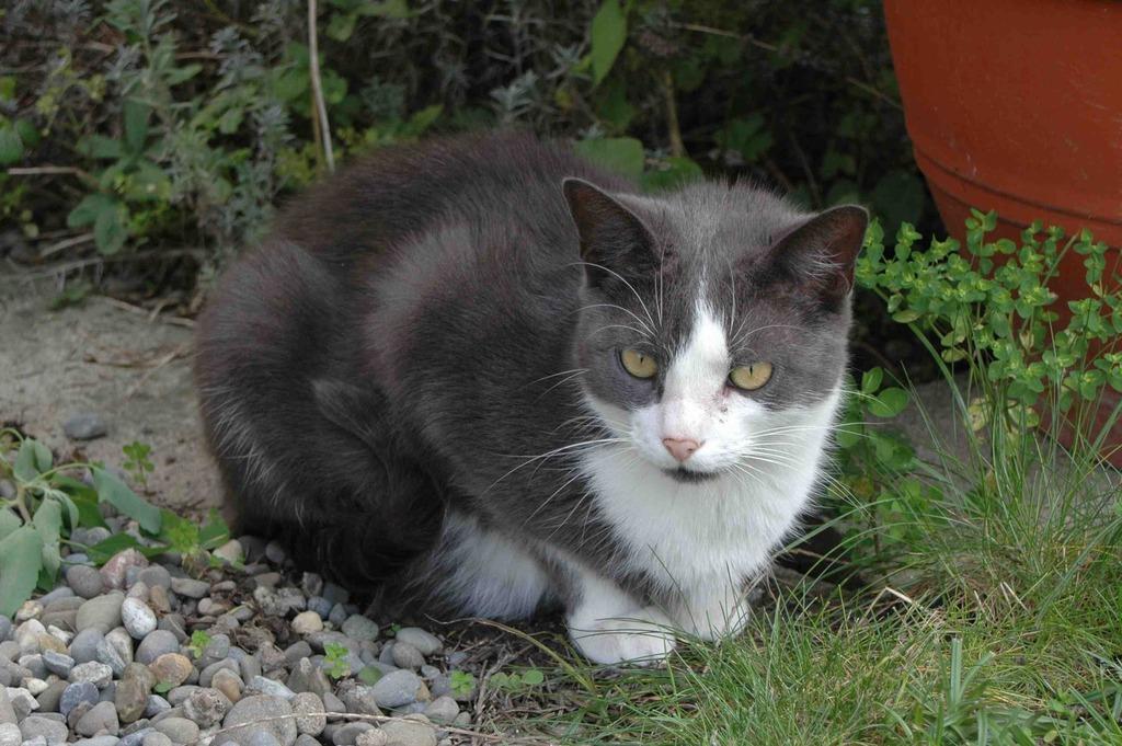 """Cat """"Quentin"""""""