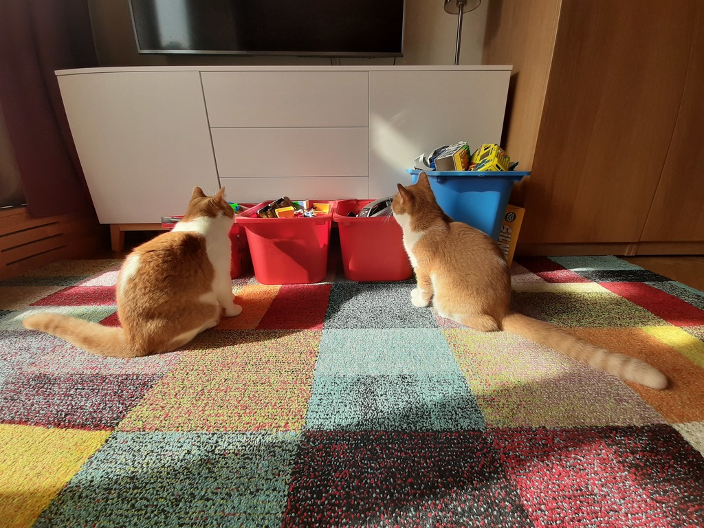 Prague apartment, our two cats