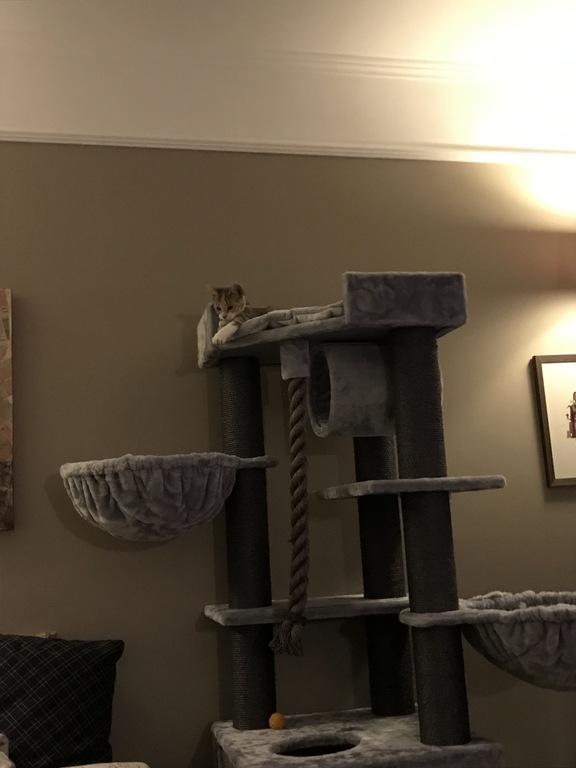 Our Cat Tilda's paradise