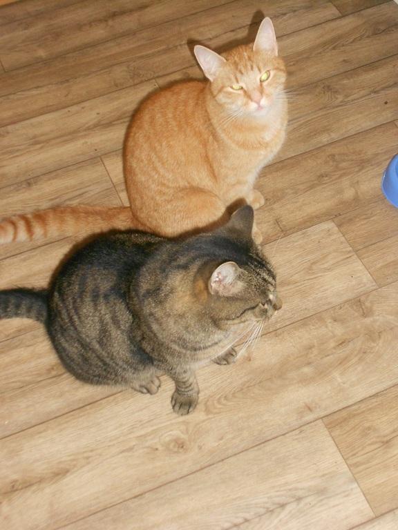 Gandalf und Garfield
