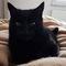Thomas O'Malley - our grumpy tom cat
