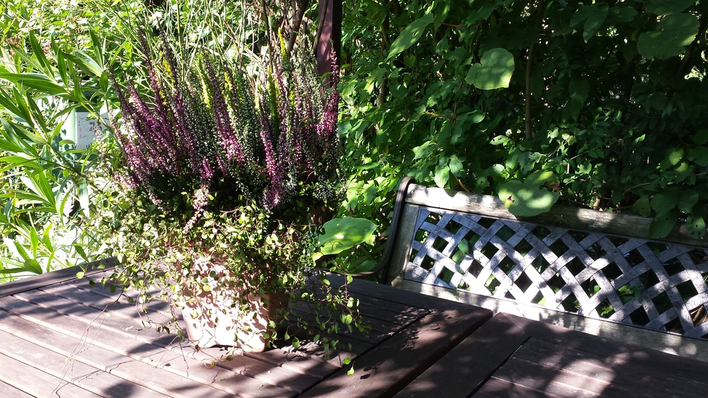 bench and table in the garden