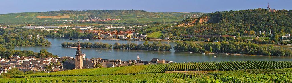Rheingau (wine area)
