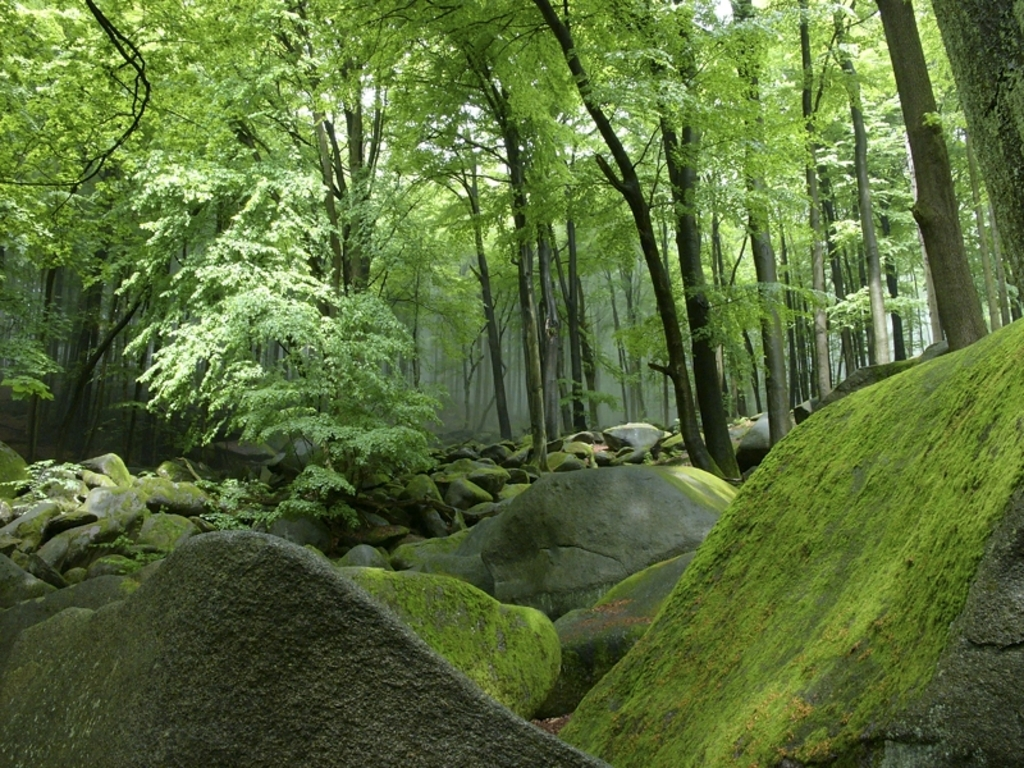 Odenwald - 45 min by car