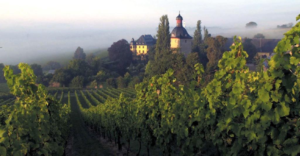 Rheingau&Wein - 30 min by car