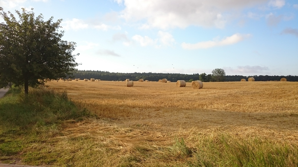 View from the property to the field and the forest / Blick vom Grundstück auf Feld und Wald
