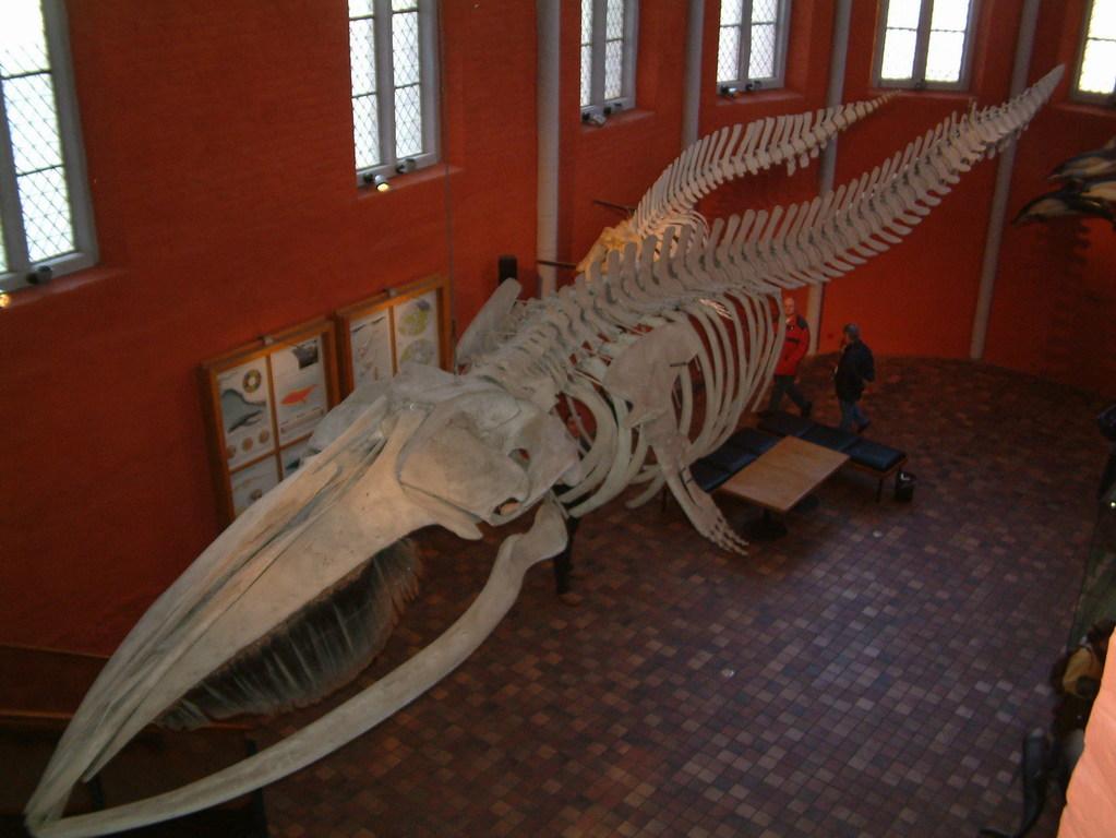 Maritime Museum Stralsund / Meeresmuseum Stralsund