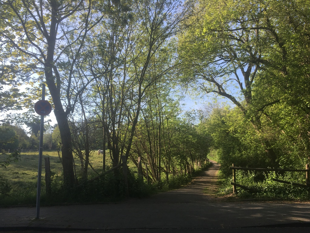 morning jogging trail