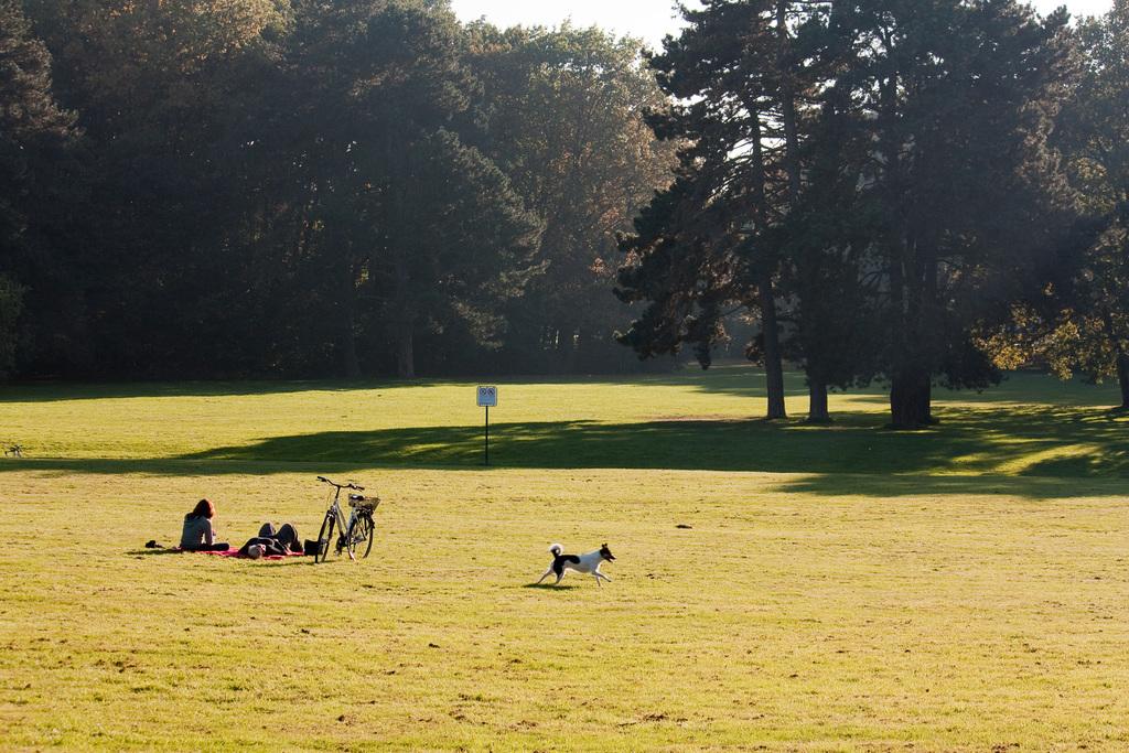 Wiese im Park