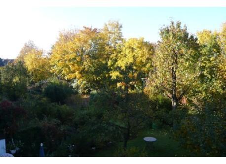 View to the neighborhood