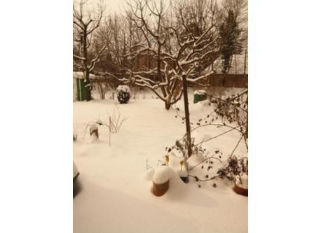Garden in winter time