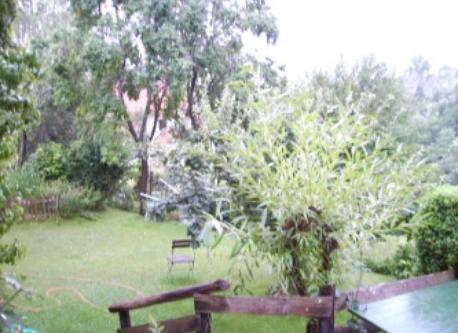 Der Garten im Sommer