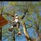 15 min. Funforest Park Kandel