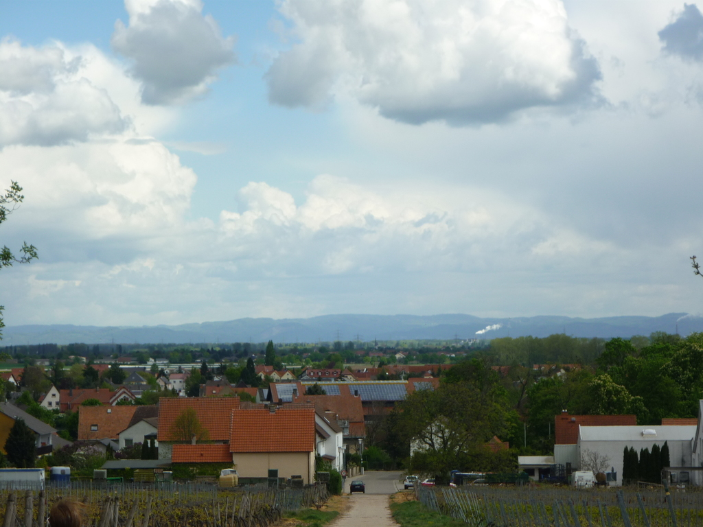 view from the vinegrapes to the Odenwald, the trees on the right are in our english garden park