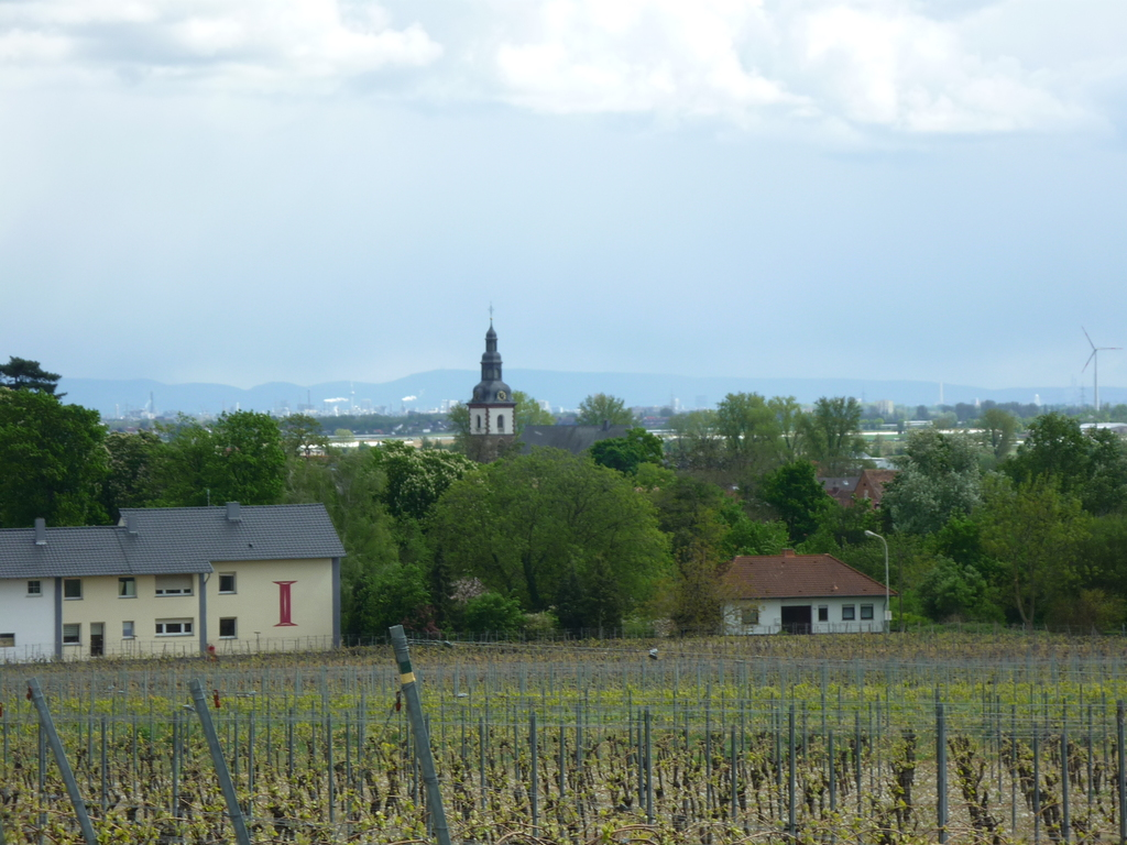 view from the vinegrapes over dirmstein, 2 streets behind our house, it´s near the steeple