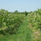 apple plantation direction gerolsheim 10 min. to walk
