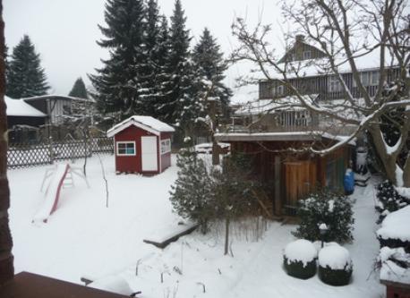 garden at wintertime