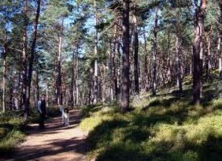Kalmit - Pfälzer Wald