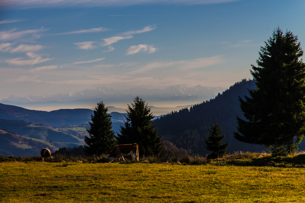 in the Black forest