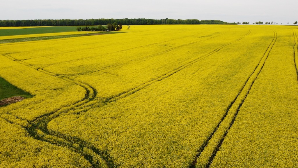 rapeseed fields, a few km from home