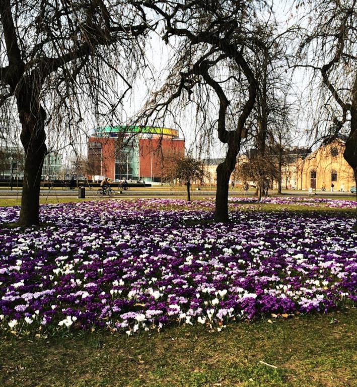 La Musée d'Art et l'Hôtel de Ville au printemps