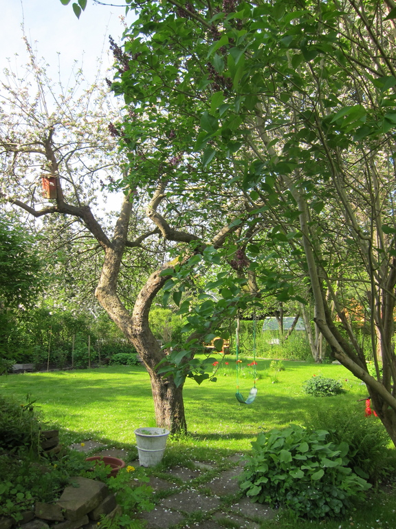 Our old apple tree