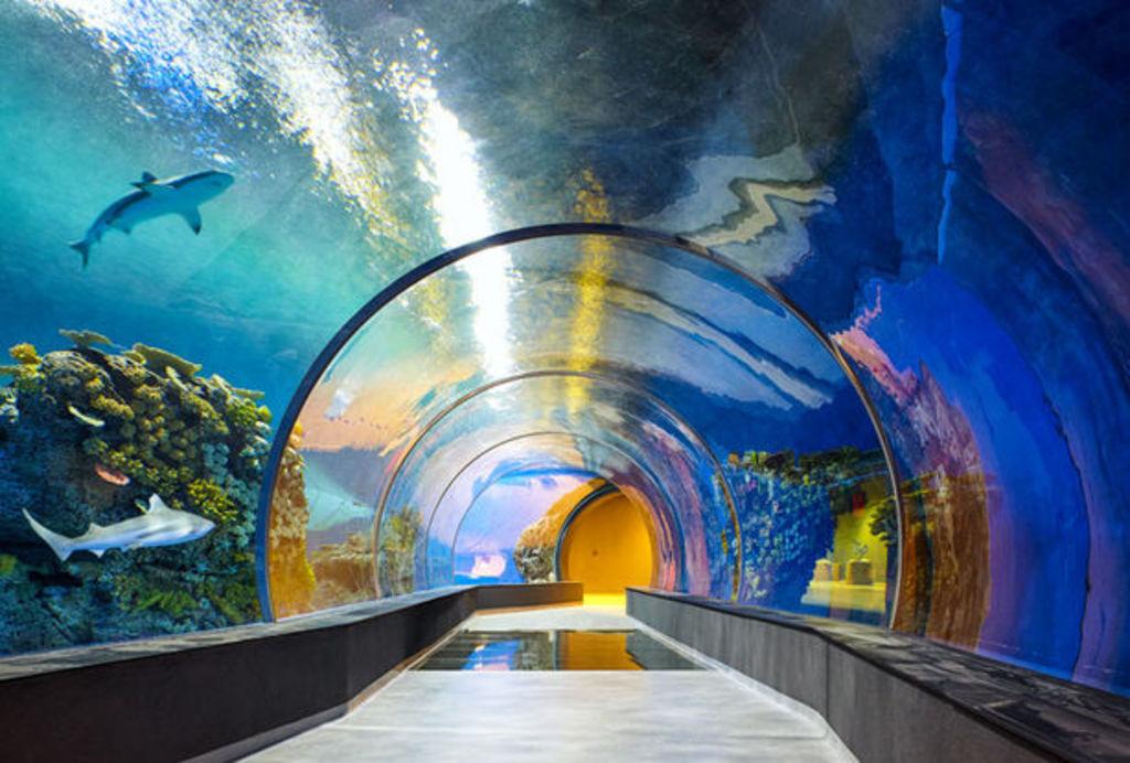 The blue planet, Copenhagen aquarium