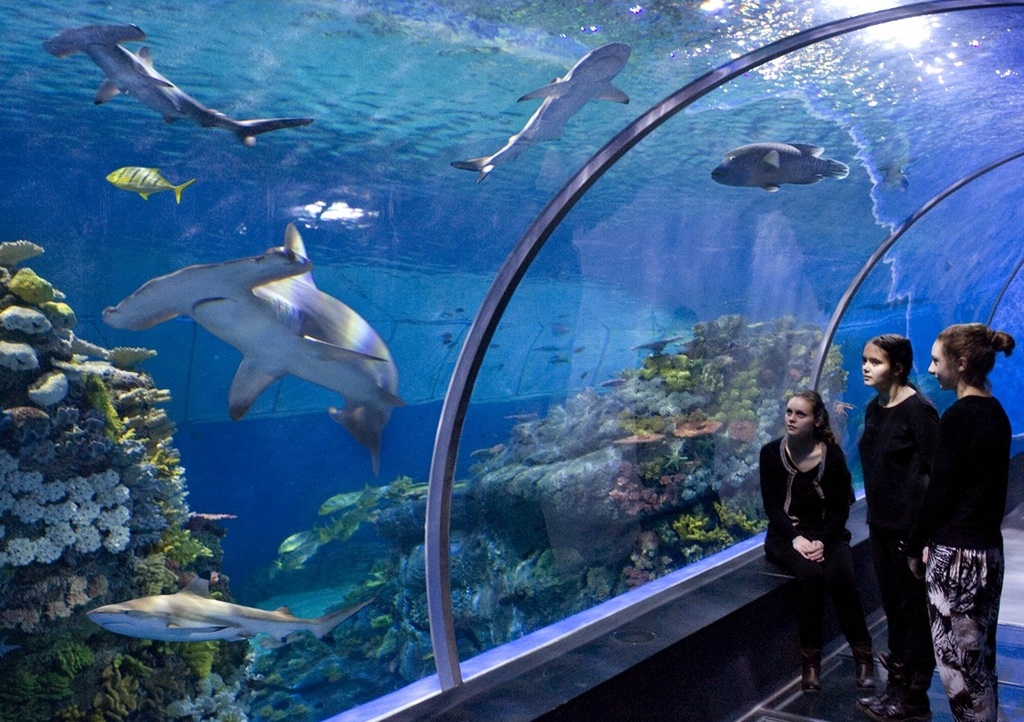 Den Blå Planet - The Blue Planet, the big National Aquarium http://denblaaplanet.dk/en/