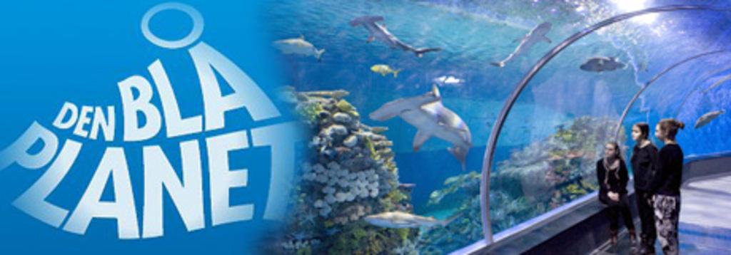 Aquarium. Copenhagen. 35min drive.