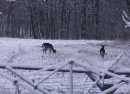 deer will often have their breakfast and supper in this field.