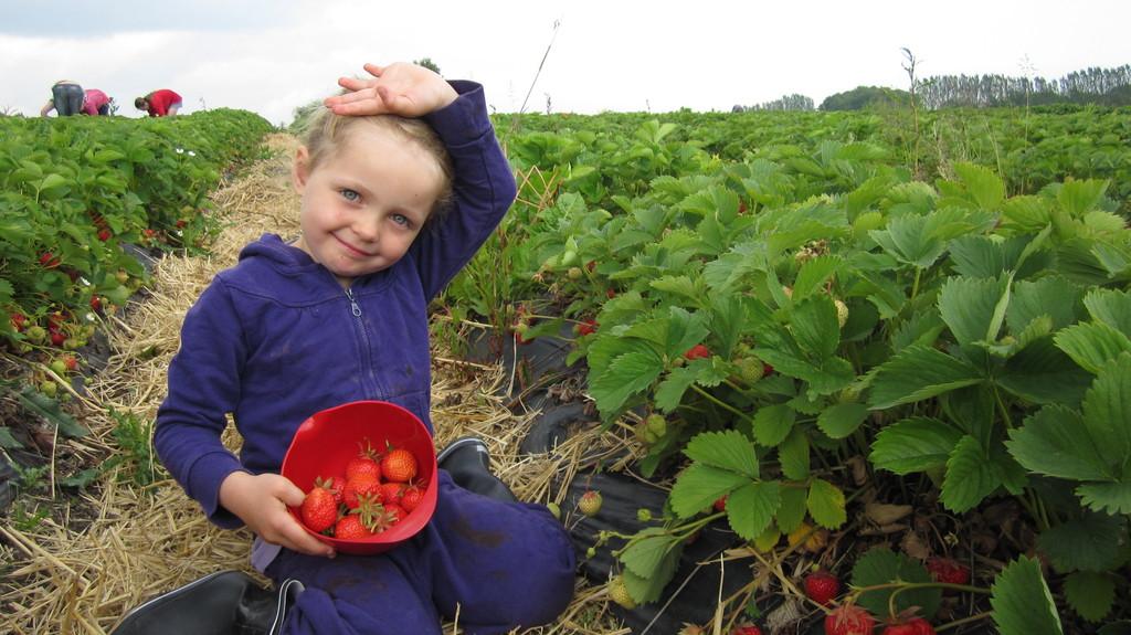 "Local fruit and vegetables at farm 10 min. walk from our home. ""Kildebrønde Frugtplantage"""