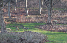 View from all rooms - you may see deer, hare and fox