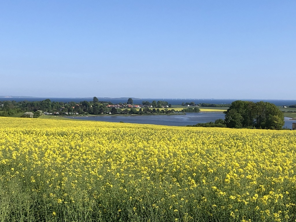 Kysing overview, behind you see the islands of Tunø and Samsø
