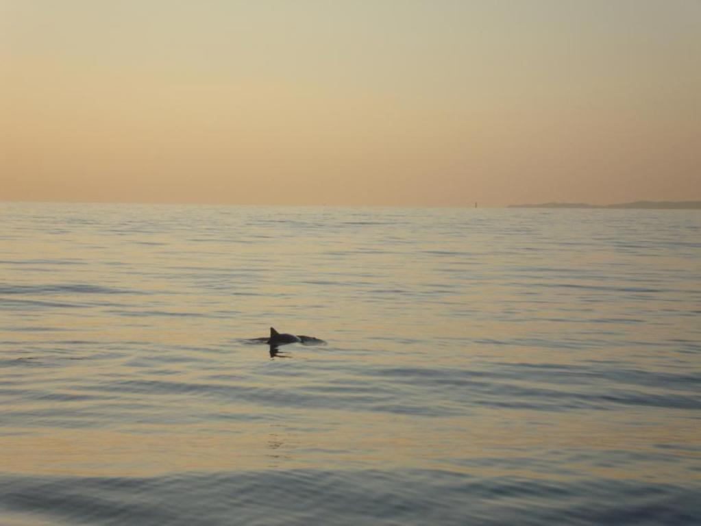 From Nyborg city you can go on arranged safari tours watching the small shy poipose whales - 30 min by car.