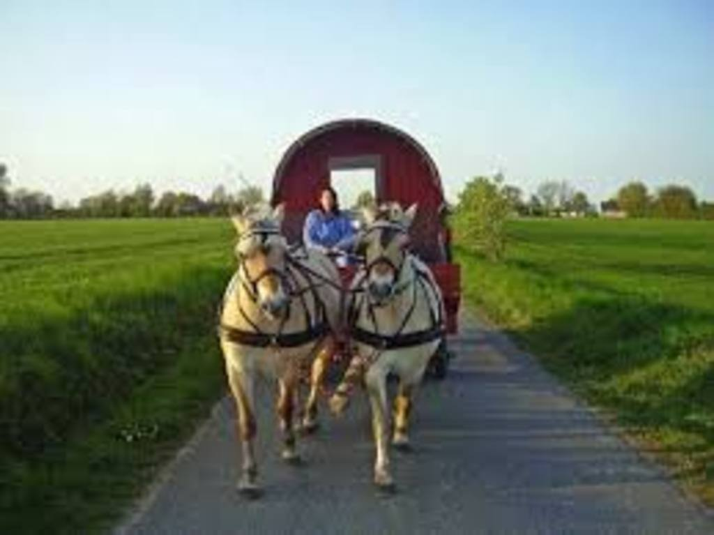 Horse wagons for rent - 15 min from here on bike