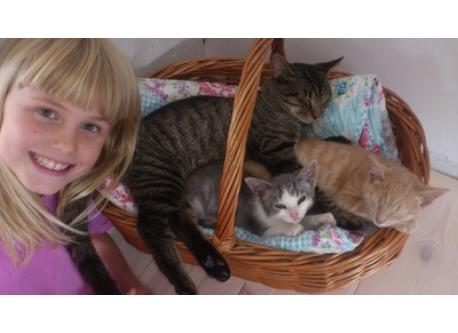 "Our sweet daughter Silja with our three cats, when they were Kitten.""Tumle"" is the big and hungry one (he can do tricks like ..."
