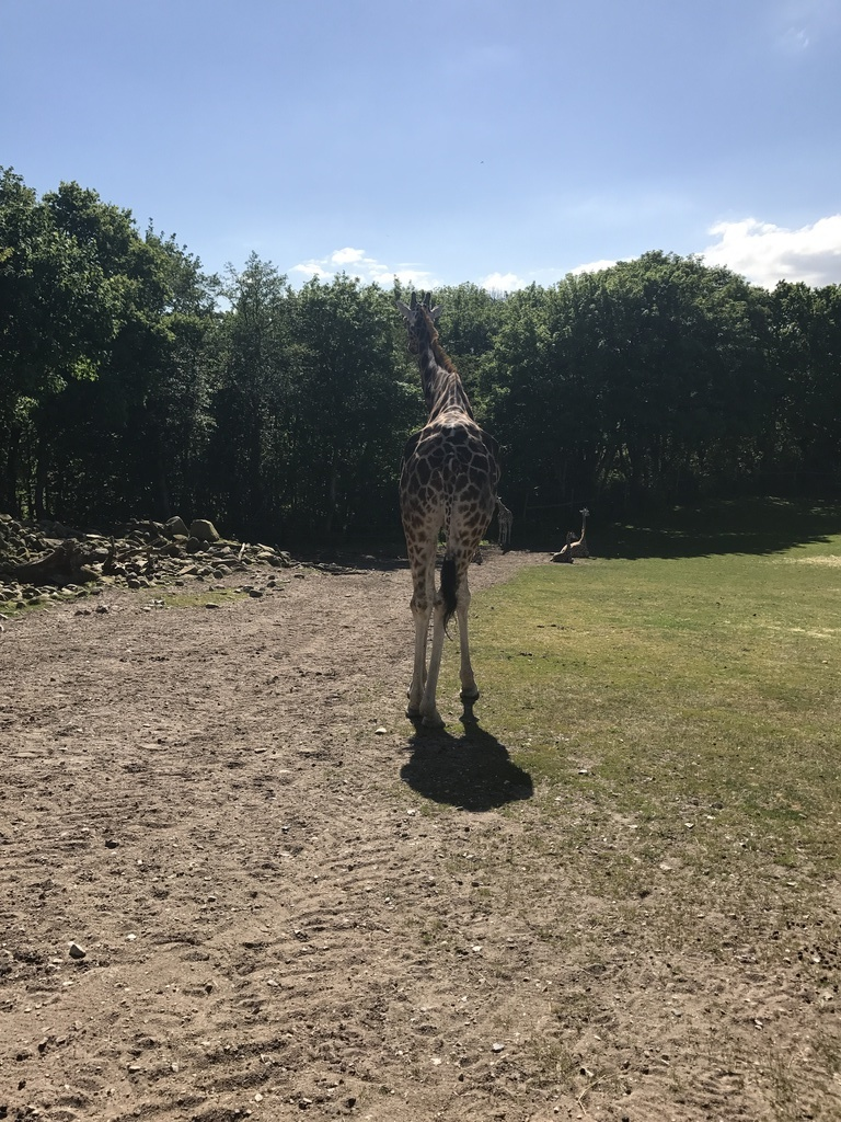 Oscar the giraffe :-) Safari park (35 min.)