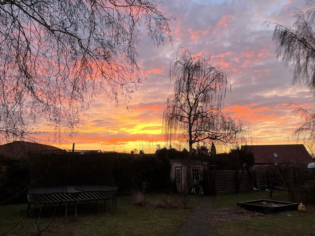 Sunset in the back garden