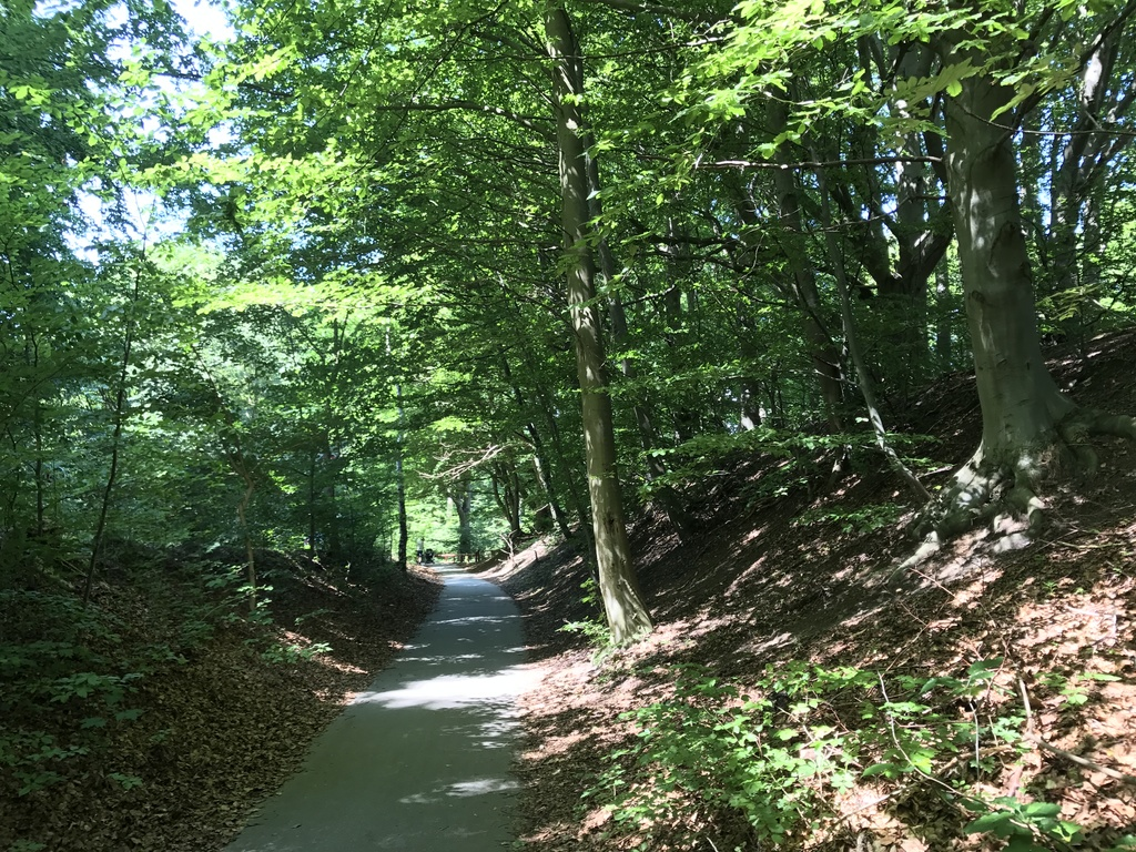 Biking through the forest to Moesgaard beach - or the MOMU museum