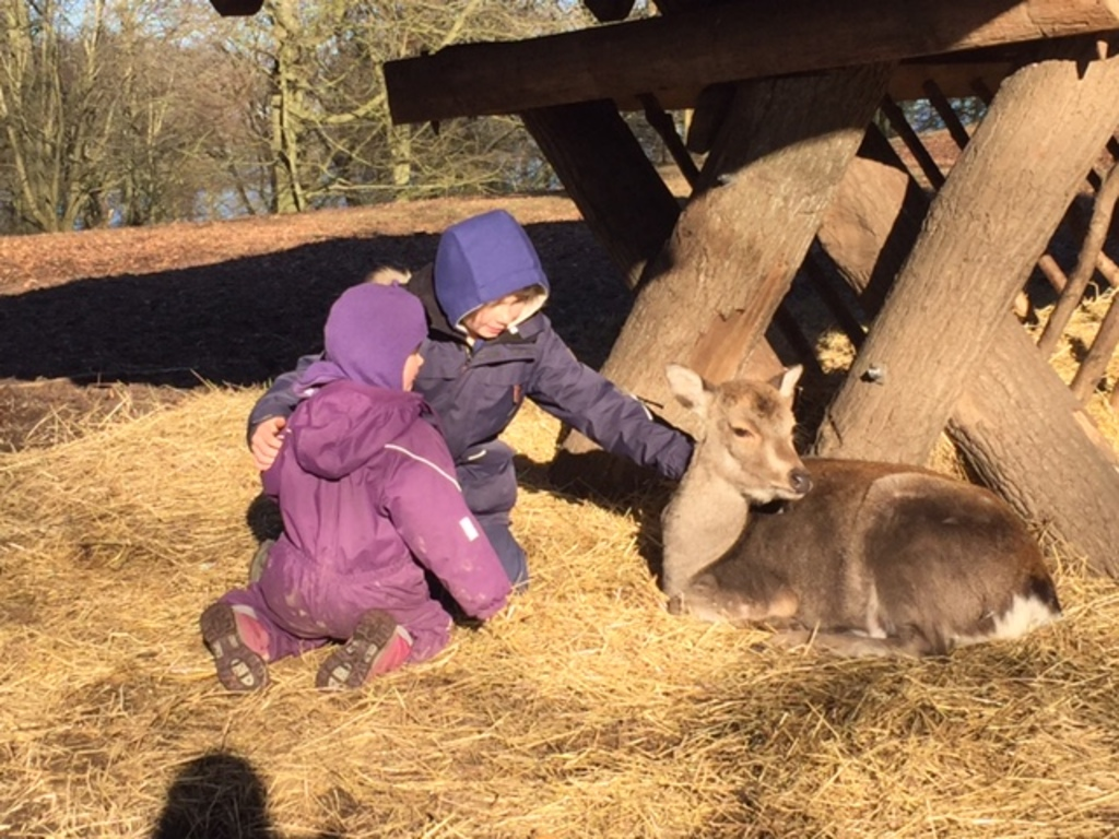 Patting the deer in Dyrehaven