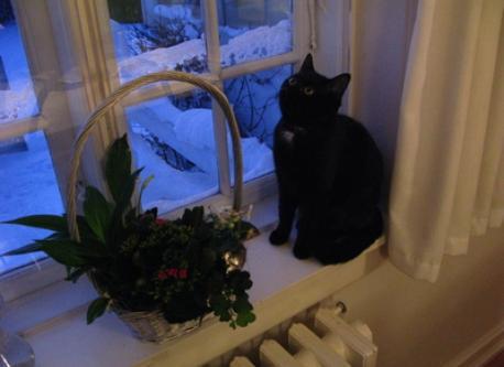 Our cat Nancy