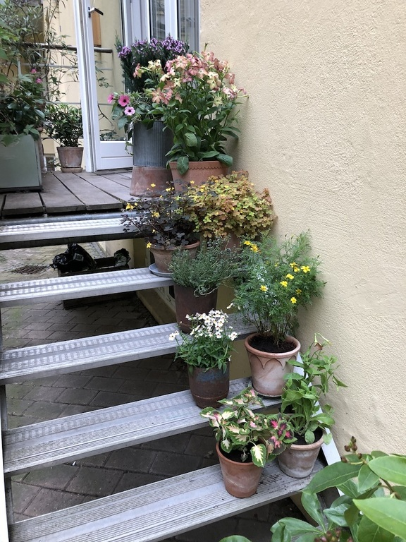 The staircase from our kitchen to the garden