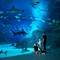 The Blue Planet Aquarium, Copenhagen (1 hr)