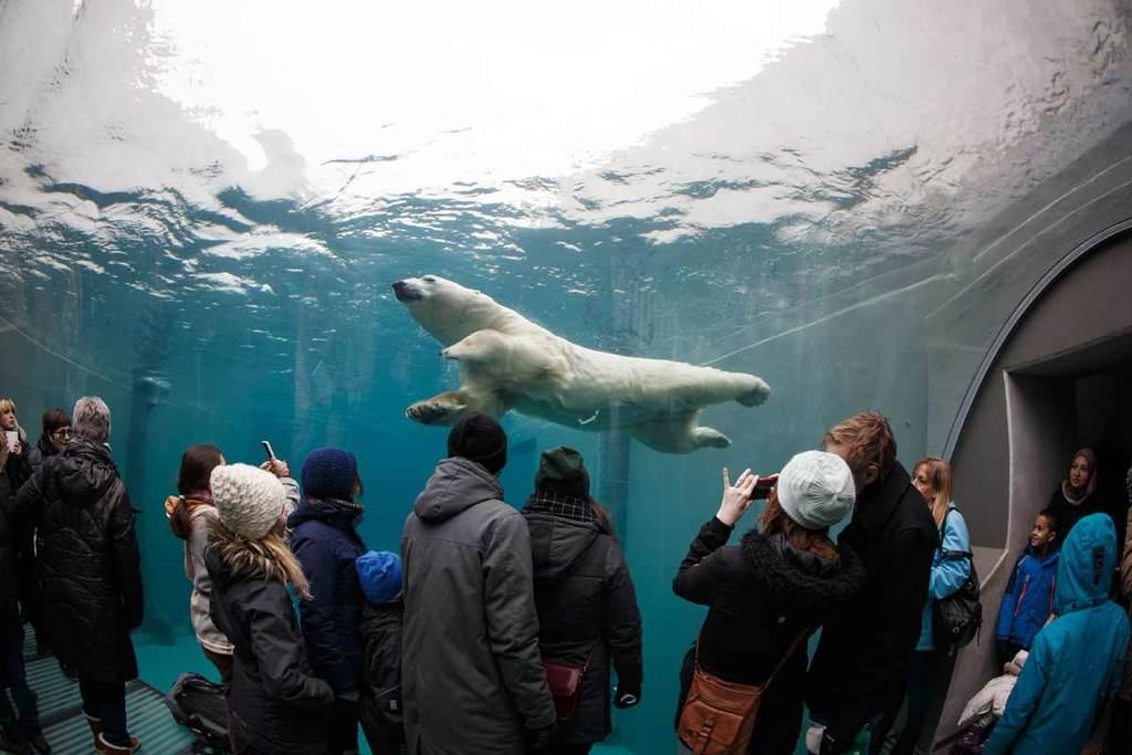 Copenhagen Zoo, polar bears (45 min)